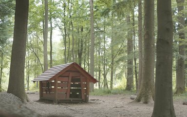 Wooden hut in Salcey forest clearing