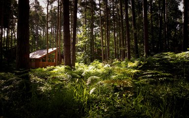 Forest Holidays cabin in the woods at Sherwood Pines