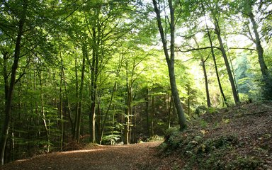 Shaded walking trail in Stoke Woods, Exeter
