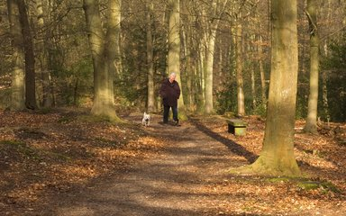 Man walking dog through autumnal forest