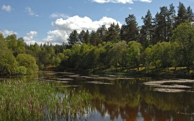 Large pond surrounded by tall trees on a sunny day