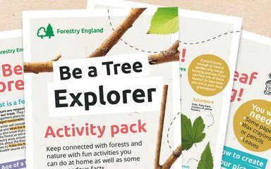 Tree Explorer activity pack
