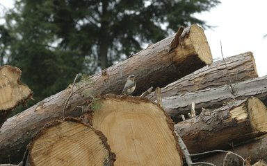 Wheater bird on logs