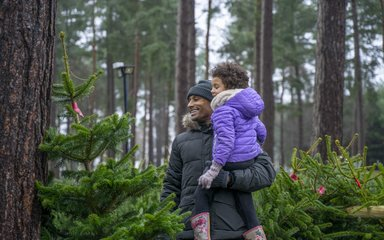 Christmas tree shopping in the forest