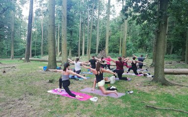 Group doing yoga among the trees in the forest