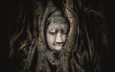 Buddha in tree