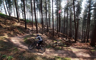 Cannock chase trail