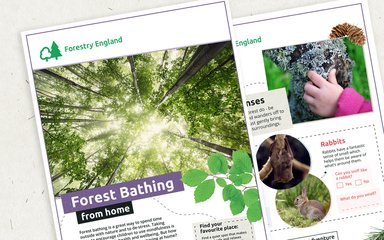 Forest bathing at home activity sheets