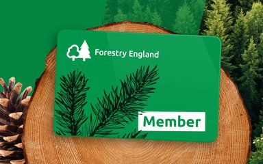 Forestry England Membership card on a wooden trunk
