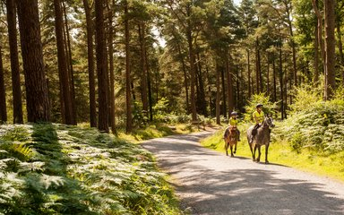 Horse riders on a woodland trail