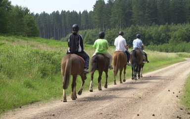 Horse riding on a forest trail