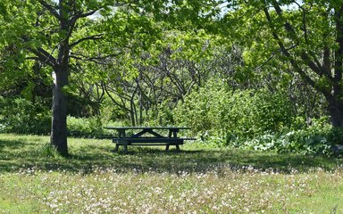 Picnic Bench in the Forest