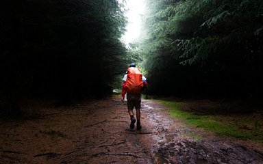 Man walking away down a forest path