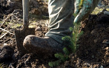Close up of boot planting small tree