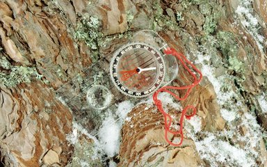 Orienteering compass on tree