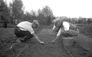 Old photo of workers planting trees at a tree nursery