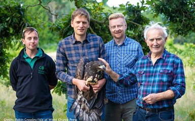 White-tailed eagle release