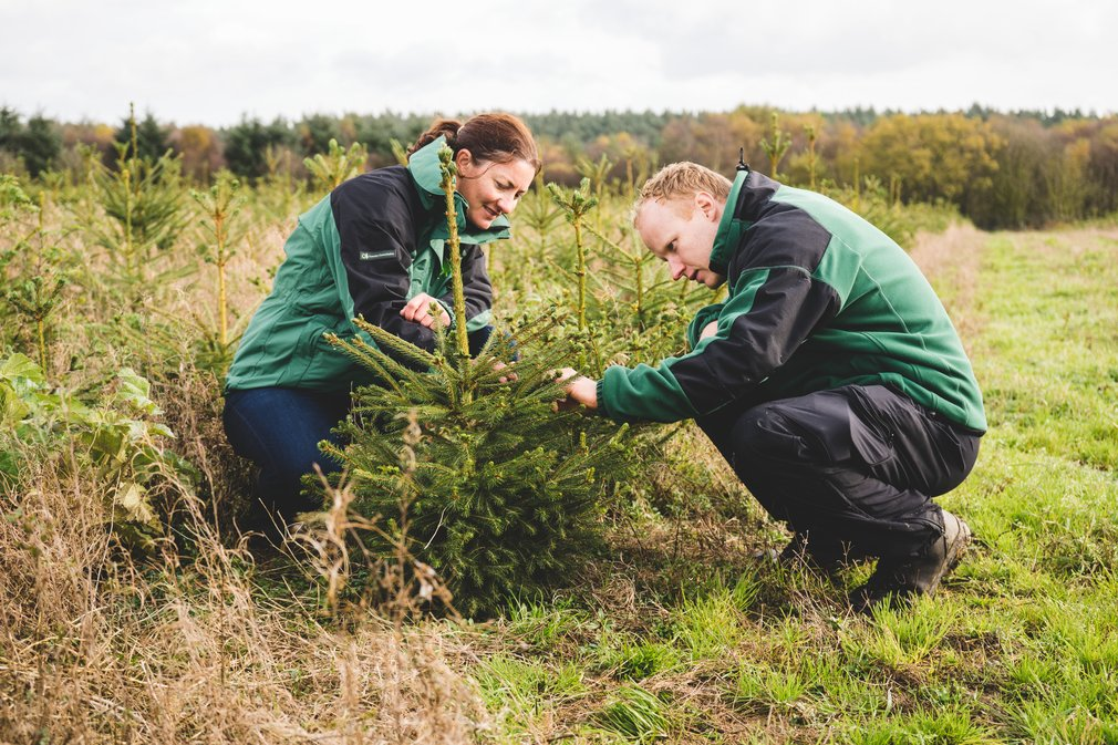 Forestry Commission staff inspecting trees for aphids