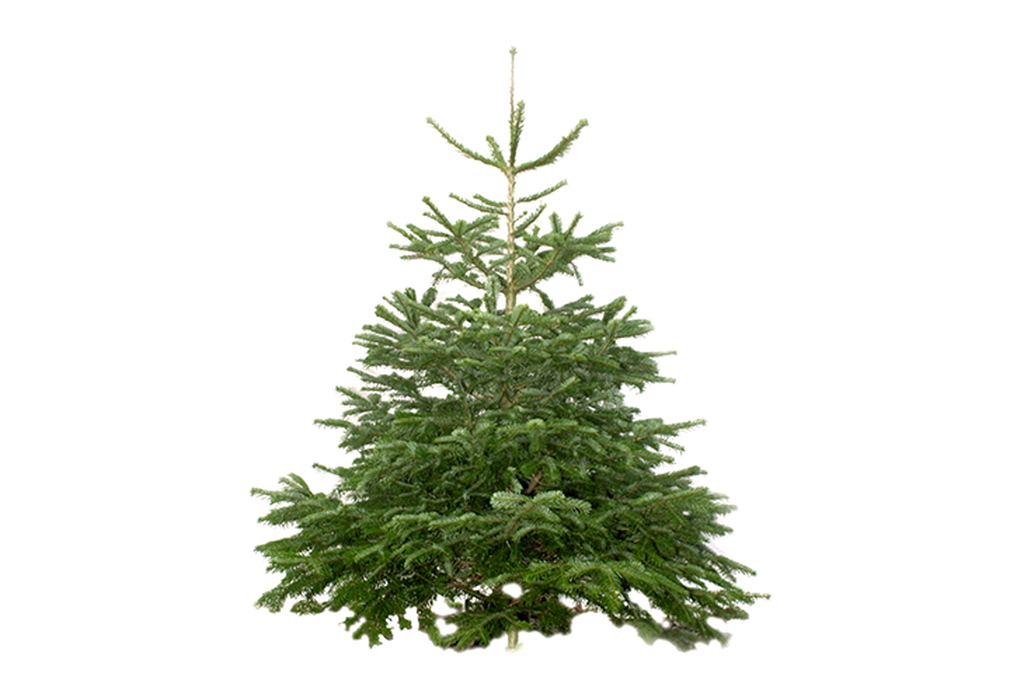 The Expert's Guide To Choosing The Right Christmas Tree