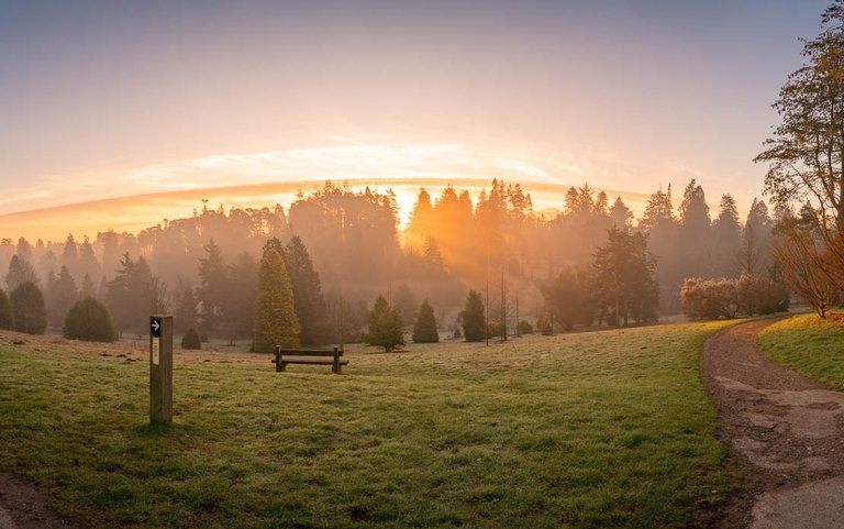 Bedgebury National Pinetum Dallimore Valley sunrise spring small