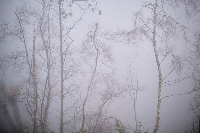 Spindling tree branches through grey fog