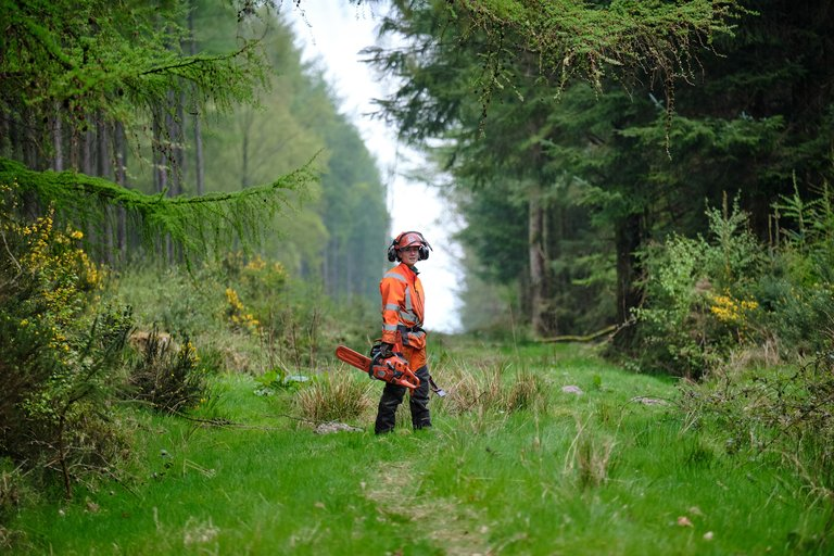 Forestry worker with chainsaw surrounded by trees