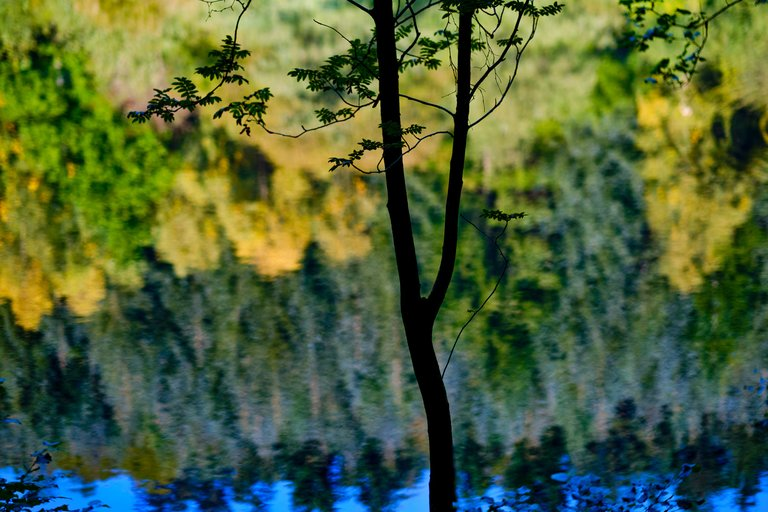 Silhouette of thin tree branch in front of forest reflected on water