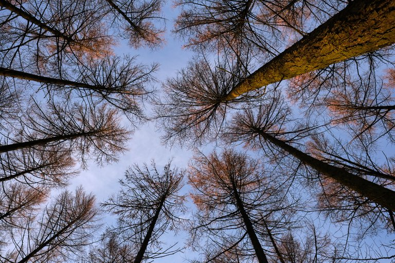 Looking up into the tree canopy from the ground