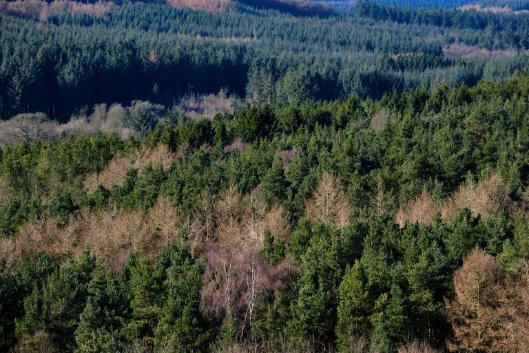Endless tree tops at Dalby forest landscape