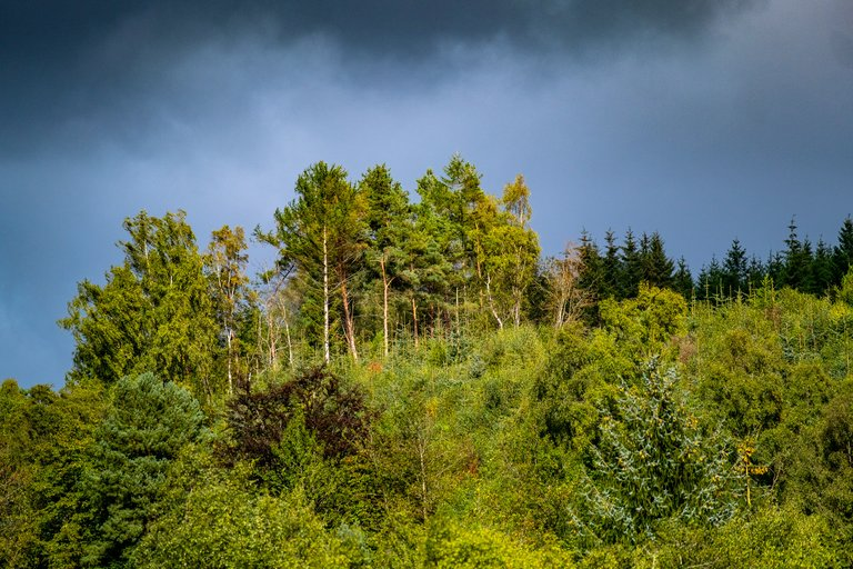 Greenery and tall trees on a hill in front of blue and grey sky